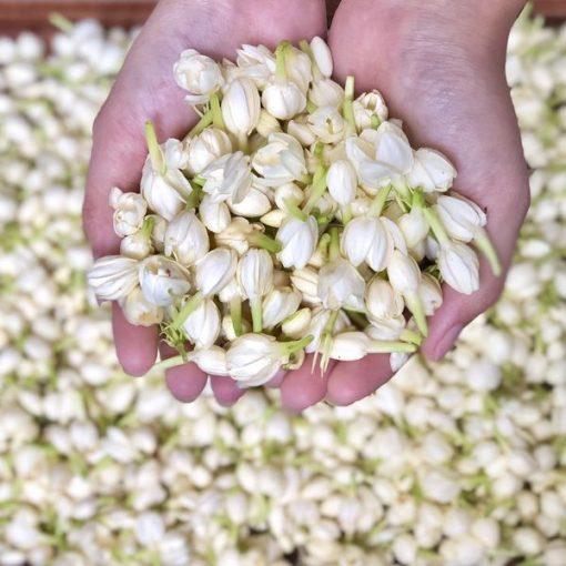 100g Hoa nhài bát tiên hoa tươi nguyên nụ 7