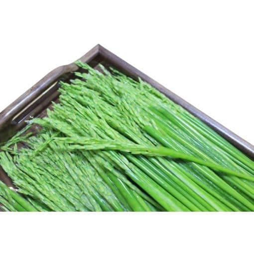 1000g đòng đòng lúa nếp hương có túi hút chân không