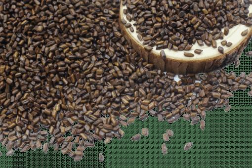 Hạt muồng (thảo quyết minh) sao khô 4