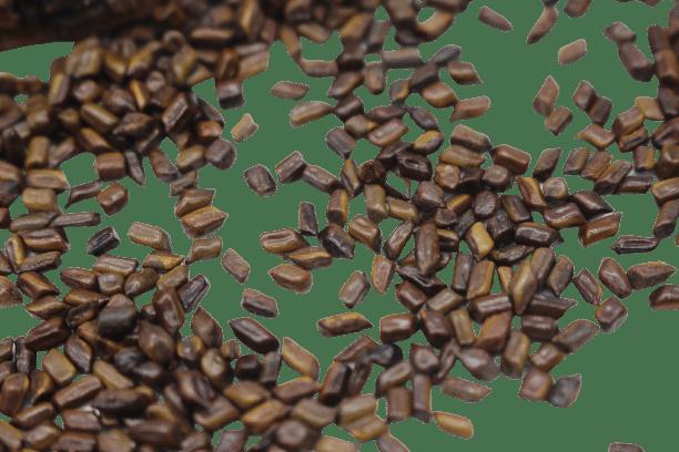Hạt muồng (thảo quyết minh) sao khô 18
